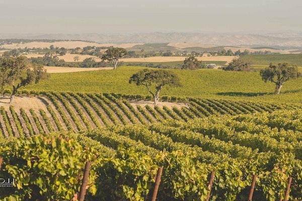 Jlohr zoom background hilltop vineyard